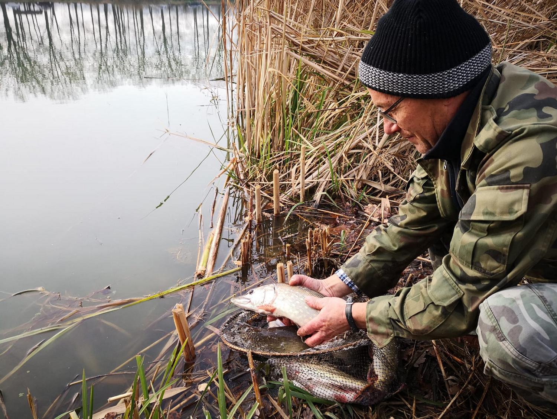 Ilustracja do informacji: Więcej ryb w stawach i rozlewiskach